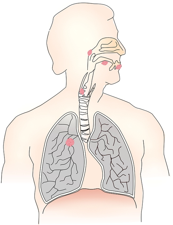 呼吸作用实质是什么呼吸作用有什么功效