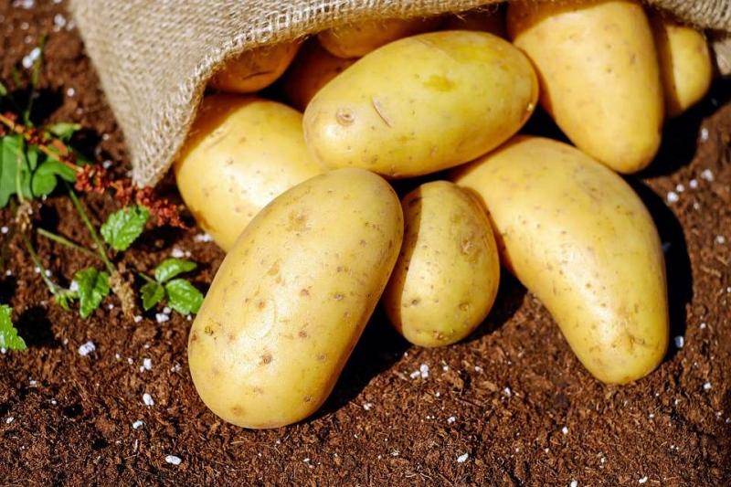 土豆可以去眼角皱纹吗认识土豆的功效